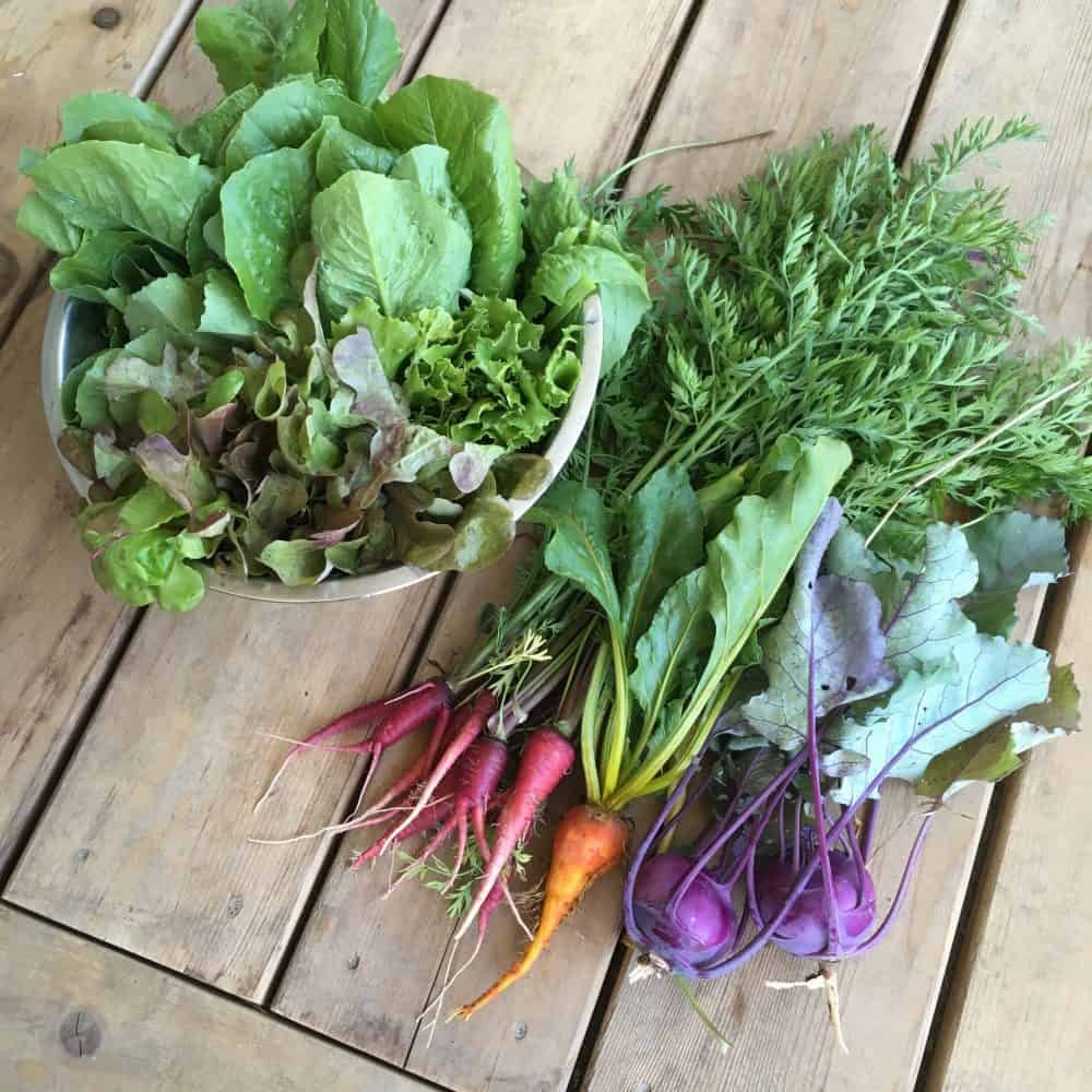 Best Vegetables For A Fall Garden: Ultimate Guide To Fall & Winter Gardening