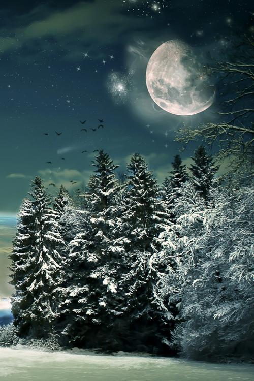Winters Night Beautiful Moon Winter Scenes Nature