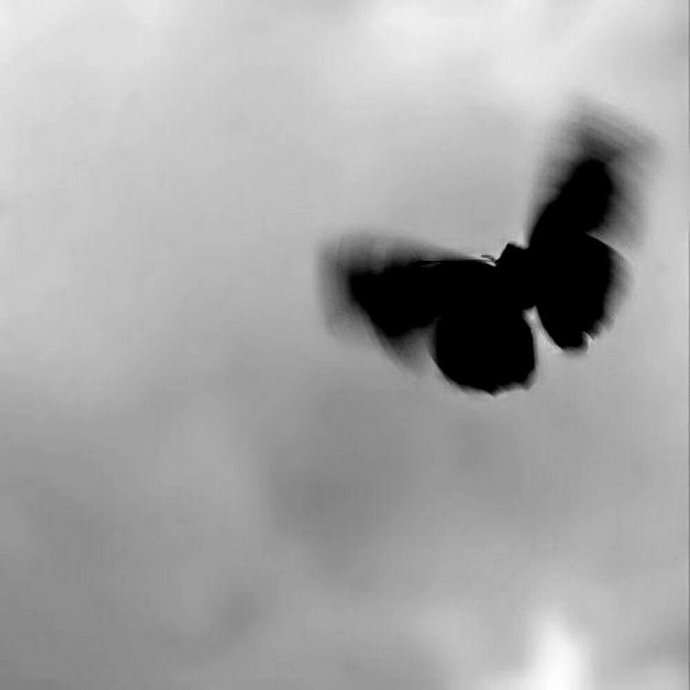 Aesthetic Black Black Butterfly Aesthetic Source By Jessicadiederich0292 Aesthetic B In 2020 Black Aesthetic Wallpaper Black Aesthetic Black And White Photo Wall