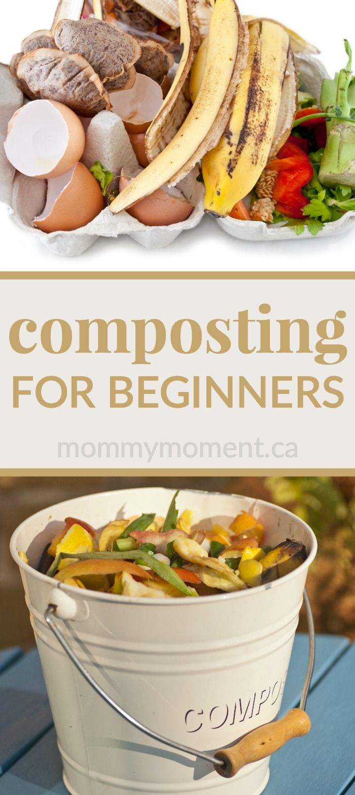 Composting For Beginners Organic Vegetable Garden Garden Compost Organic Gardening Tips
