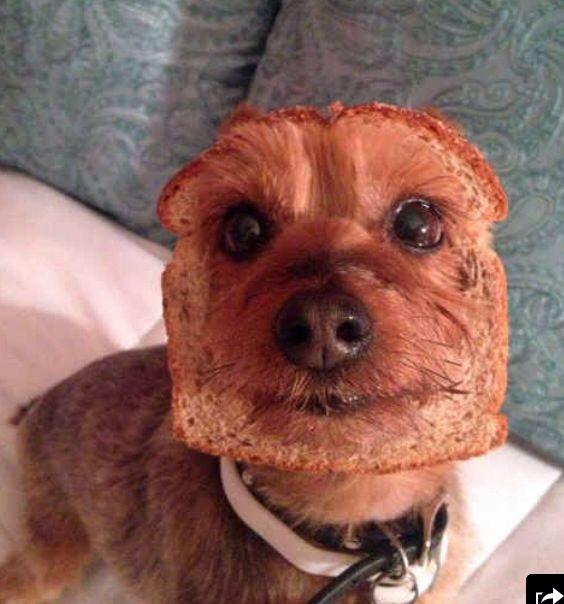 Breaded Dog