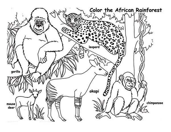 rainforest african rainforest animals coloring page african rainforest animals coloring pagefull size image