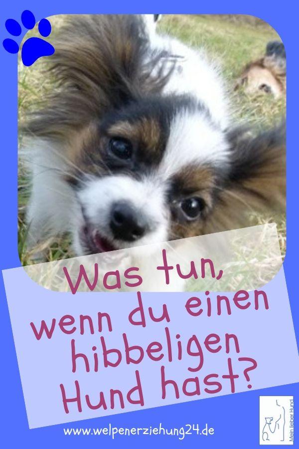 Hibbeliger Hund Was Tun Welpenerziehung Hunde Hundeverhalten Welpenerziehung
