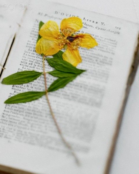 ♥ Flowers pressed into books are such lovely, romantic things.