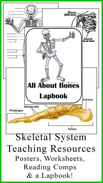 FREE All about Bones Lapbook | Body systems - locomotor system ...