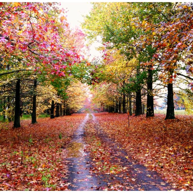 Autumn colours - Yarramalong Valley, NSW, AUSTRALIA | Day trips, Fall  travel, Trip