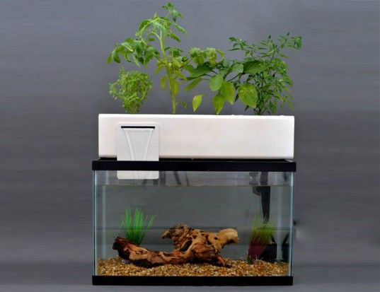 Andrew de melo 39 s aquaponic blue green box uses fish waste for Fish tank hydroponic garden