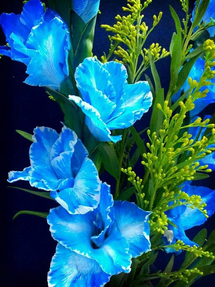 Blue Gladiolus Birth Month Flowers Gladiolus Flower Month Flowers
