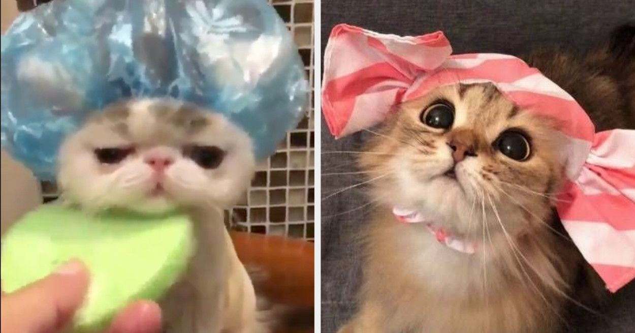 16 Cat Posts From This Week That Are Both Pleasant And Purrfect Cat Post Cats Cat Leash