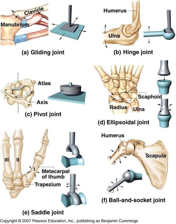 IV. Classify Synovial Joint based on type of movement Types of ...