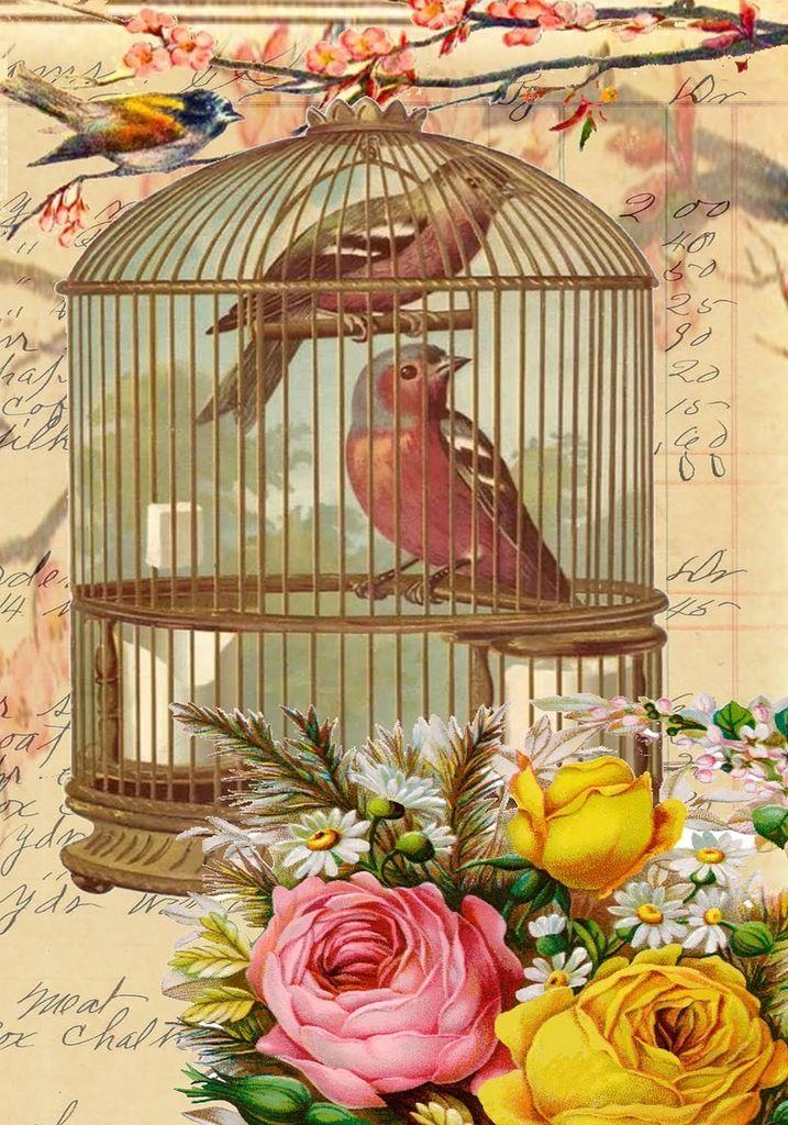 Птицы в клетке открытка, защитник украины