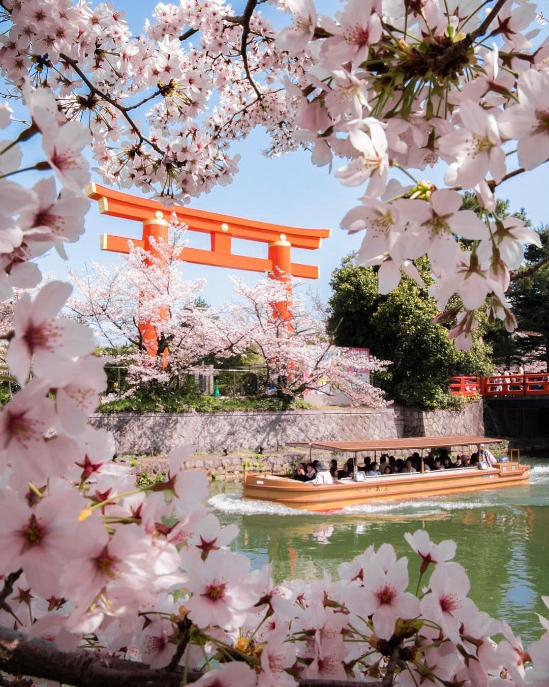 We All Know That Cherry Blossoms Are One Of The Most Famous Natural Symbols Of Japan Tell Us What Make Cherry Blossom Japan Japan Sakura Japan Photography