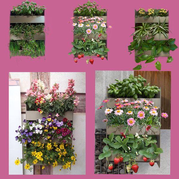 Garten Krauter Blumen In 2020 Pflanzen Mini Garten Grunpflanzen