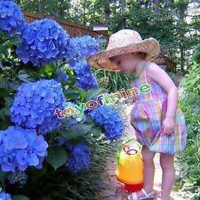 50pcs Blue Hydrangea Flower Seeds Rare Flower Seeds Garden Views Bluhende Pflanzen Blumen Anbauen Hydrangea Macrophylla