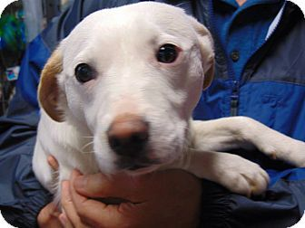 Memphis Tn Jack Russell Terrier Mix Meet Molly A Dog For