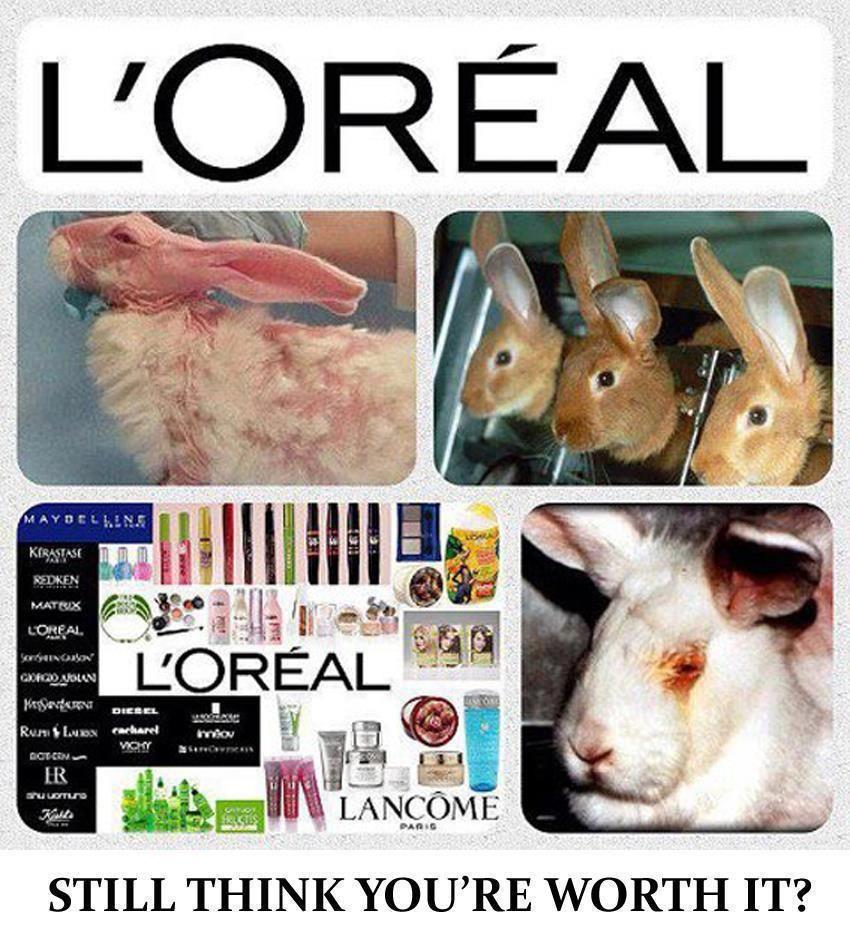 Loreal animal testing STOP!!!! Pinterest Animal