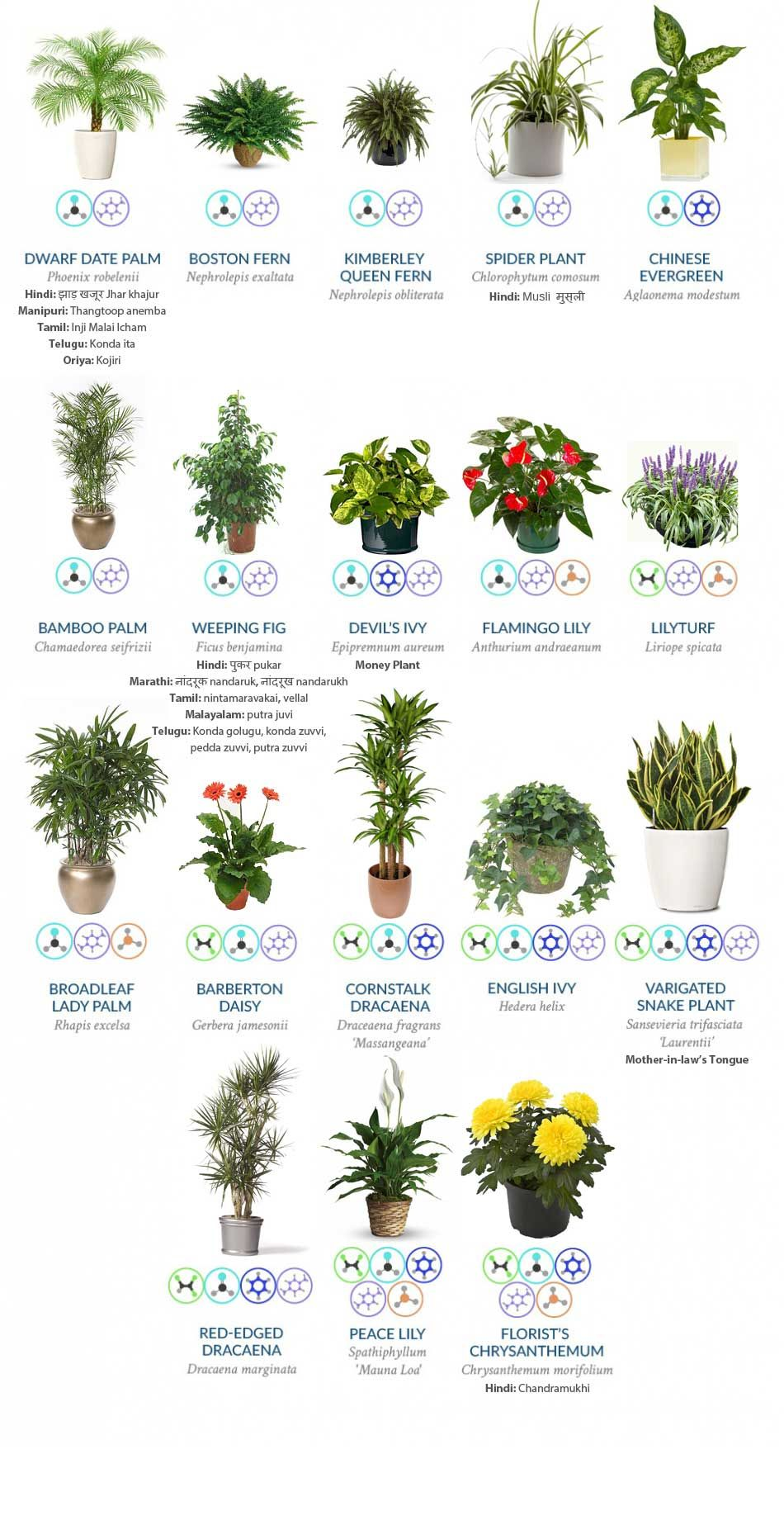 Indoor Plants Clean Air