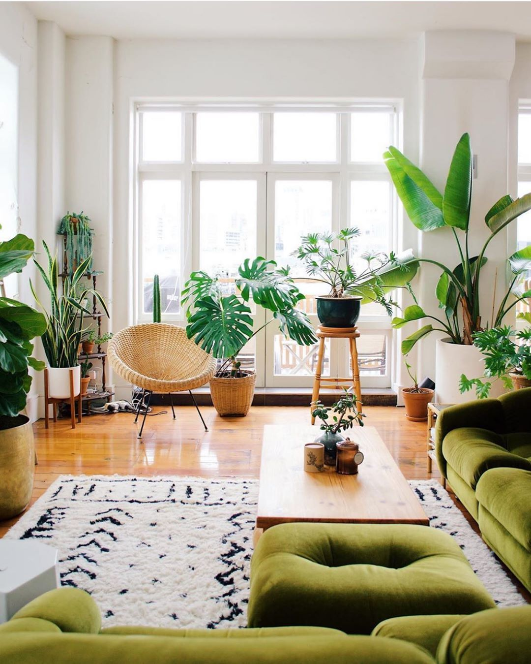 Urban Jungle Bloggers On Instagram Living Room Goals All The Way From New Zealand Green Sofa Living Room Urban Living Room Big Windows Living Room Jungle living room ideas