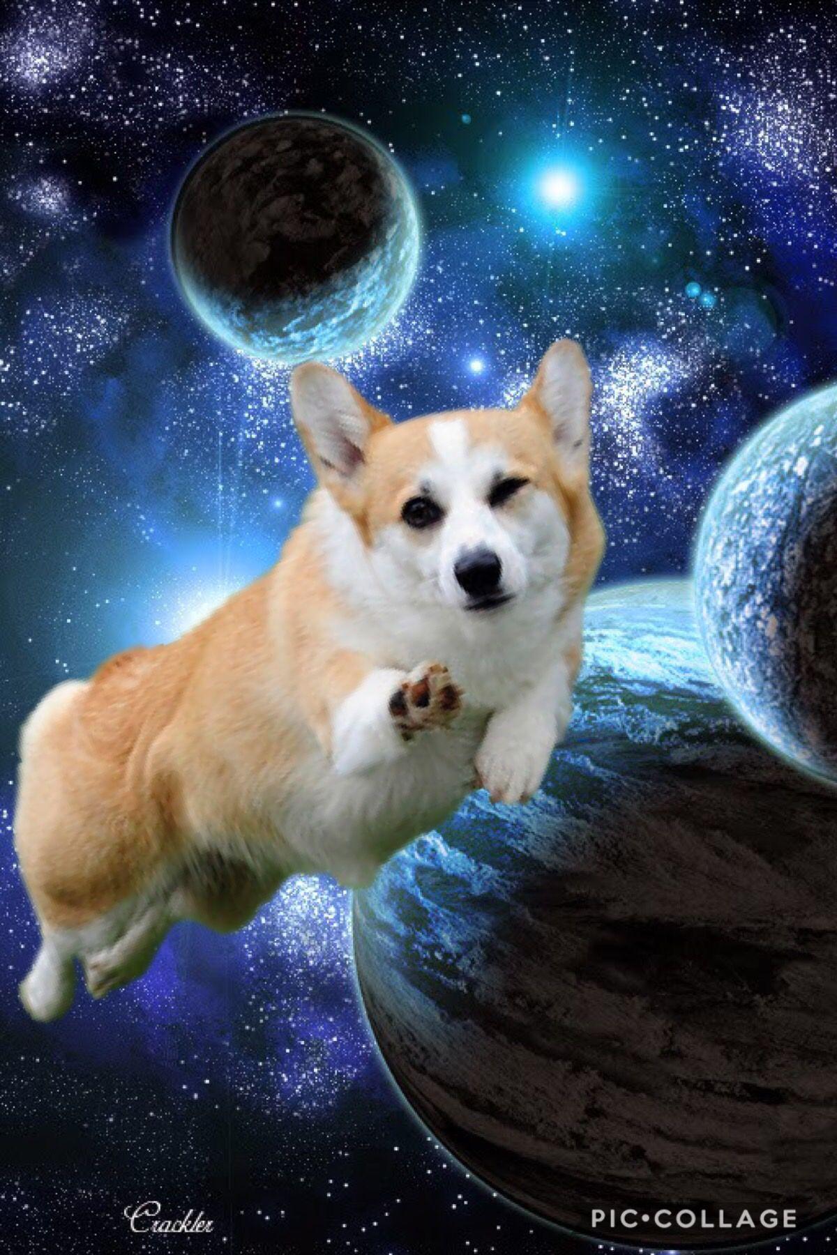 Space Corgi Corgi Fluffy Corgi Pets