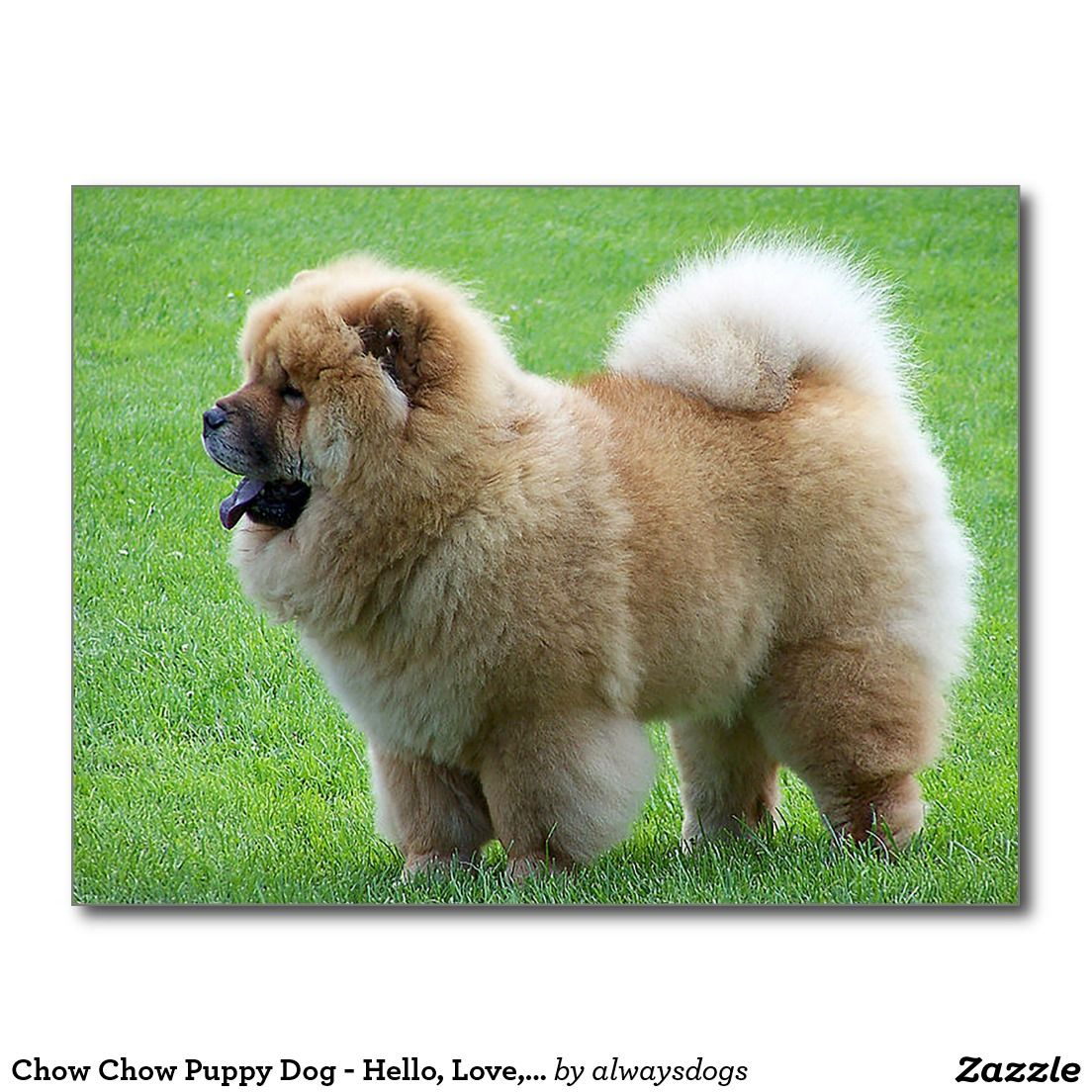 Chow Chow Puppy Dog Hello Love Thinking Of You Postcard