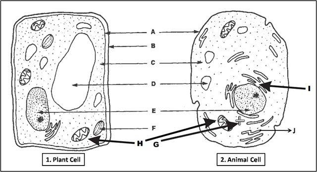 cell diagram ideas