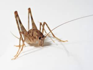 Pin By Sombreeero On 10 Termite Control Best Pest Control Brick Township