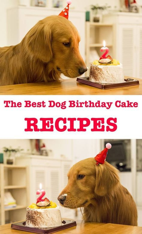 The Very Best Dog Birthday Cake Recipes For Your Pups Special Day
