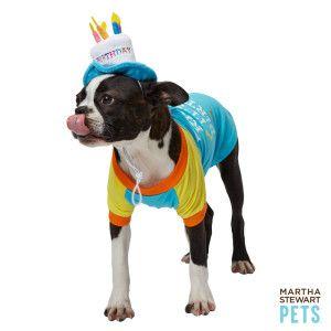 Martha Stewart PetsR Happy Birthday Hat