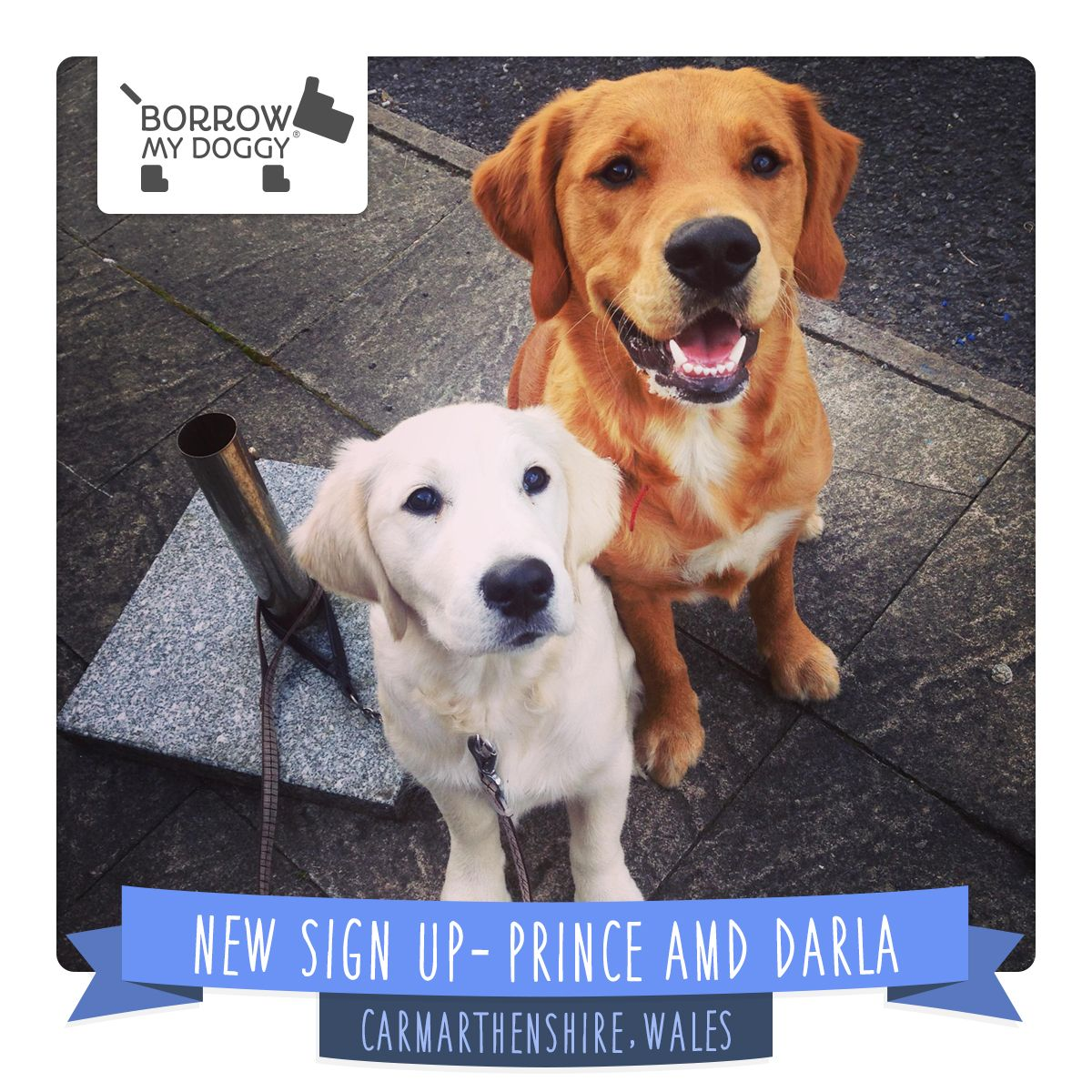 #NewDoggySignUp Prince and Darla are a loving, fun and energetic duo who enjoy attention all day, every day :)