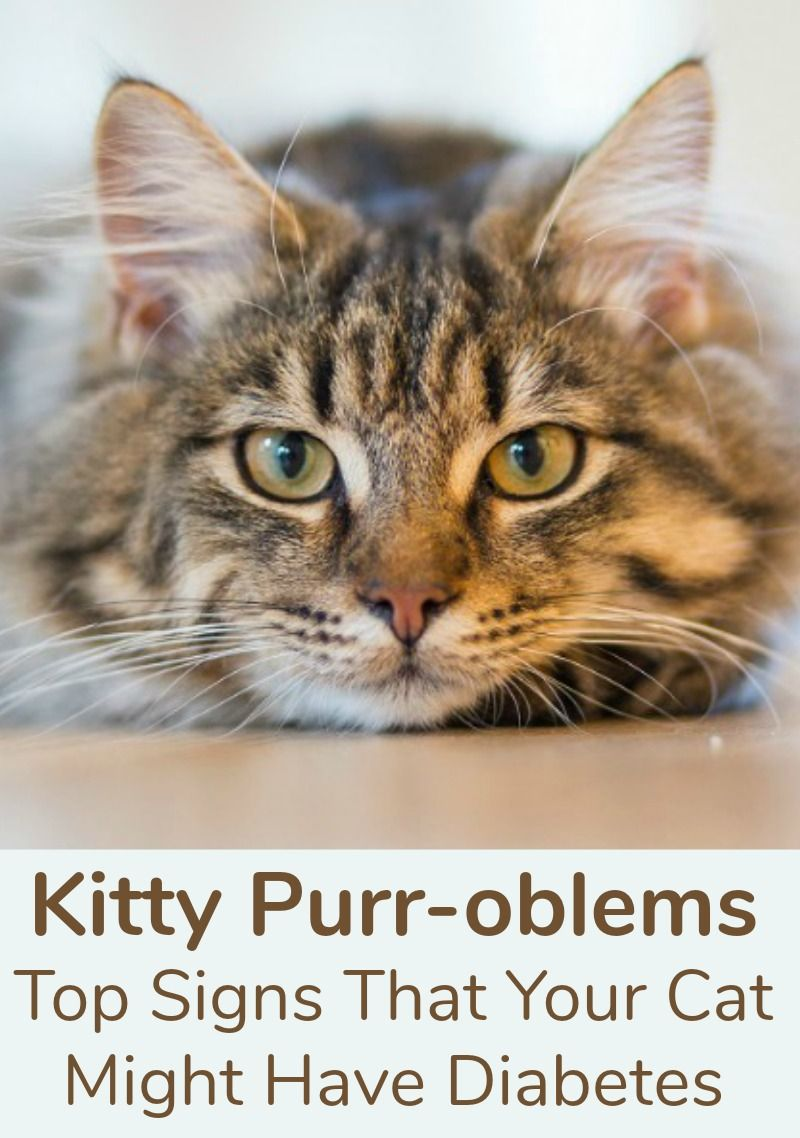 Kitty Purr Oblems Top Signs That Your Cat Might Have Diabetes Cat Care Cats Cat Toilet Training