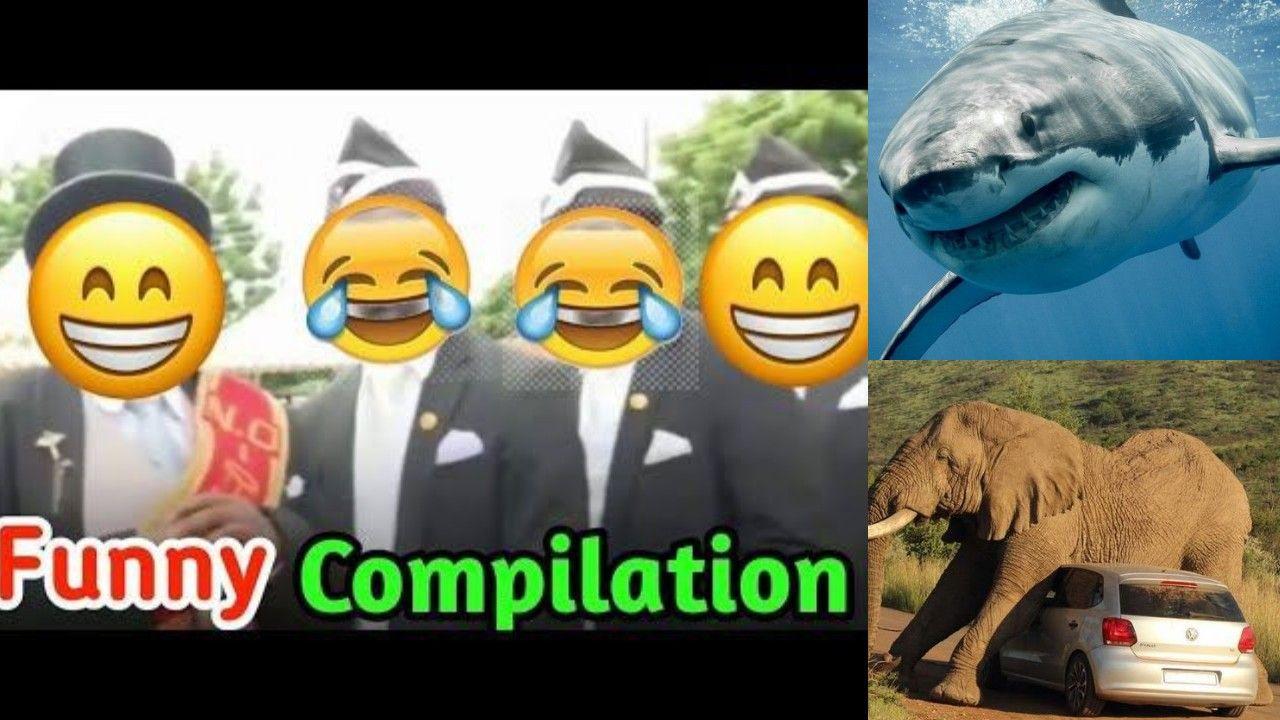Coffin dance in 2020 Funny animal fails, Dance memes