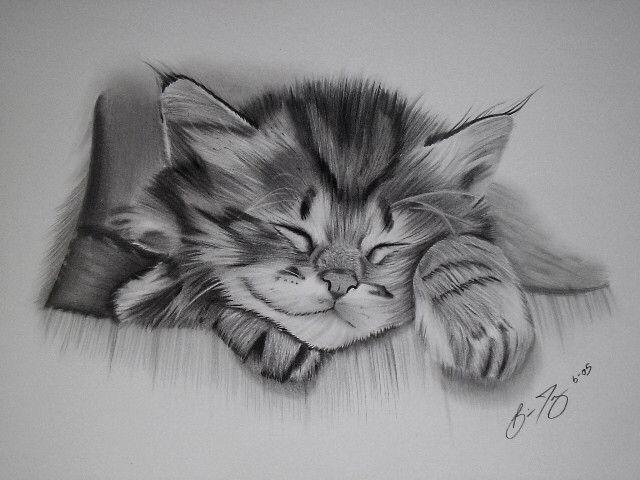 Pencil Drawing Animal Drawings Kitten Drawing Realistic Drawings