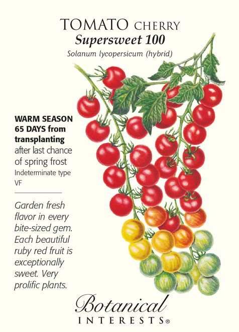 Supersweet 100 Cherry Tomato - 20 Seeds - Botanical Interests