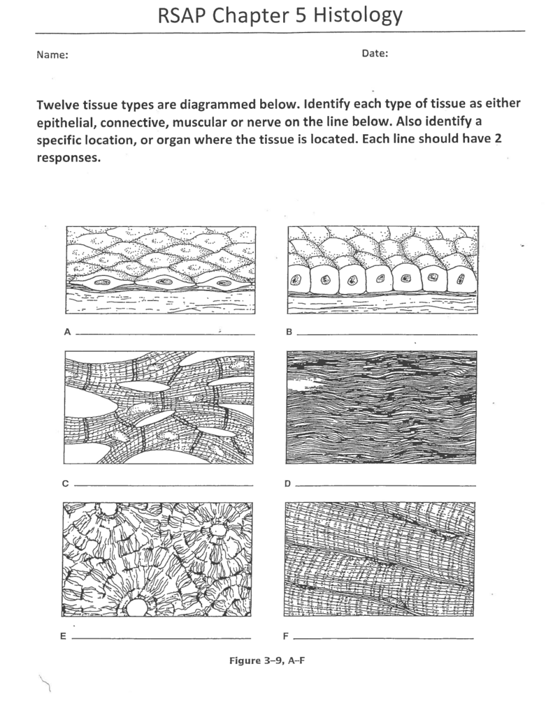 Rsap Chapter 5 Histology Tissue Types Tissue Worksheets