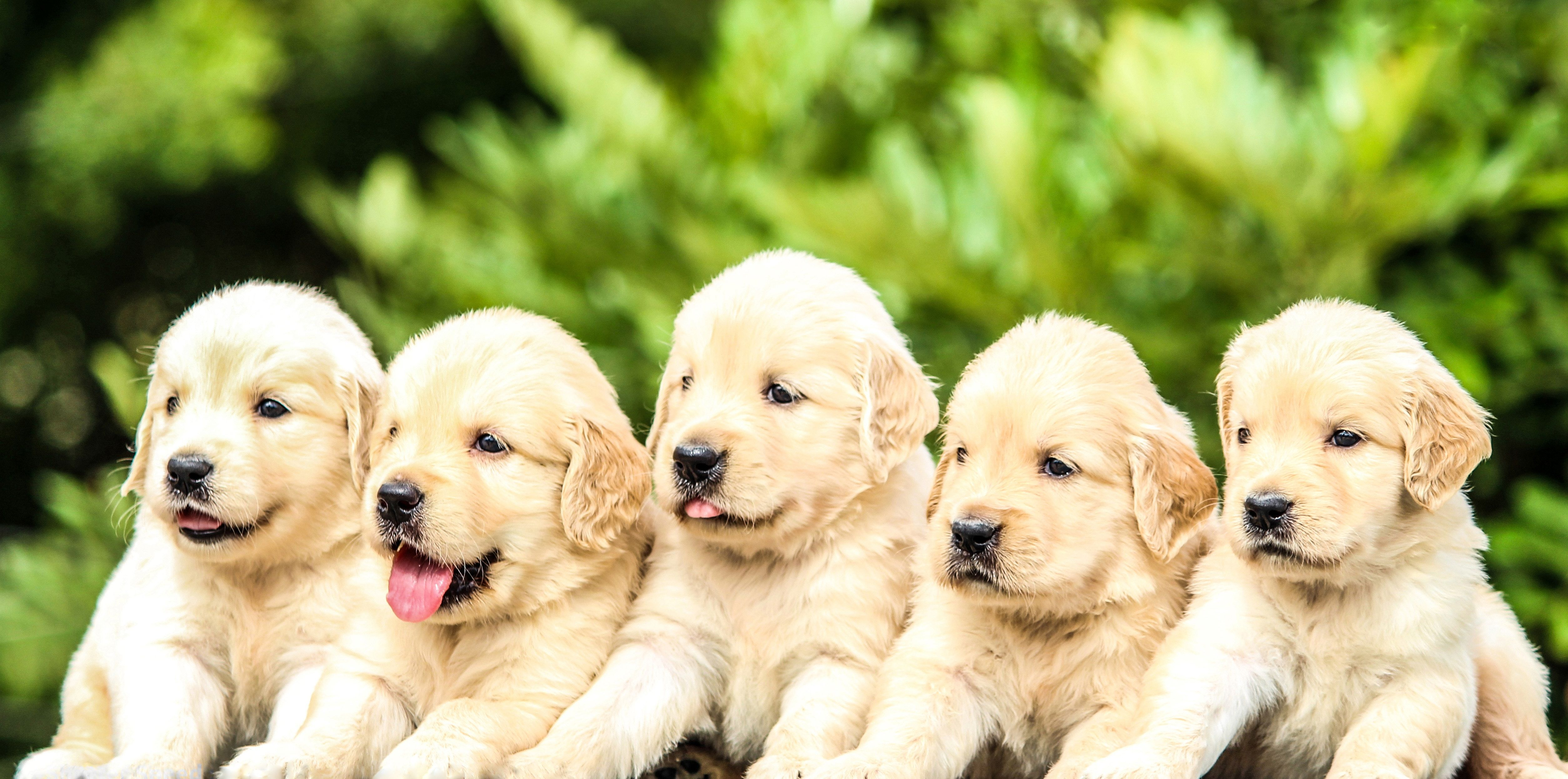 Get Your Dogs Ready Summer Is Coming And You Re Going To Want To Bring Your Dog To Plum Valley S Dog Park Dog Park Happy Animals Dog Ages Cute Puppy Videos