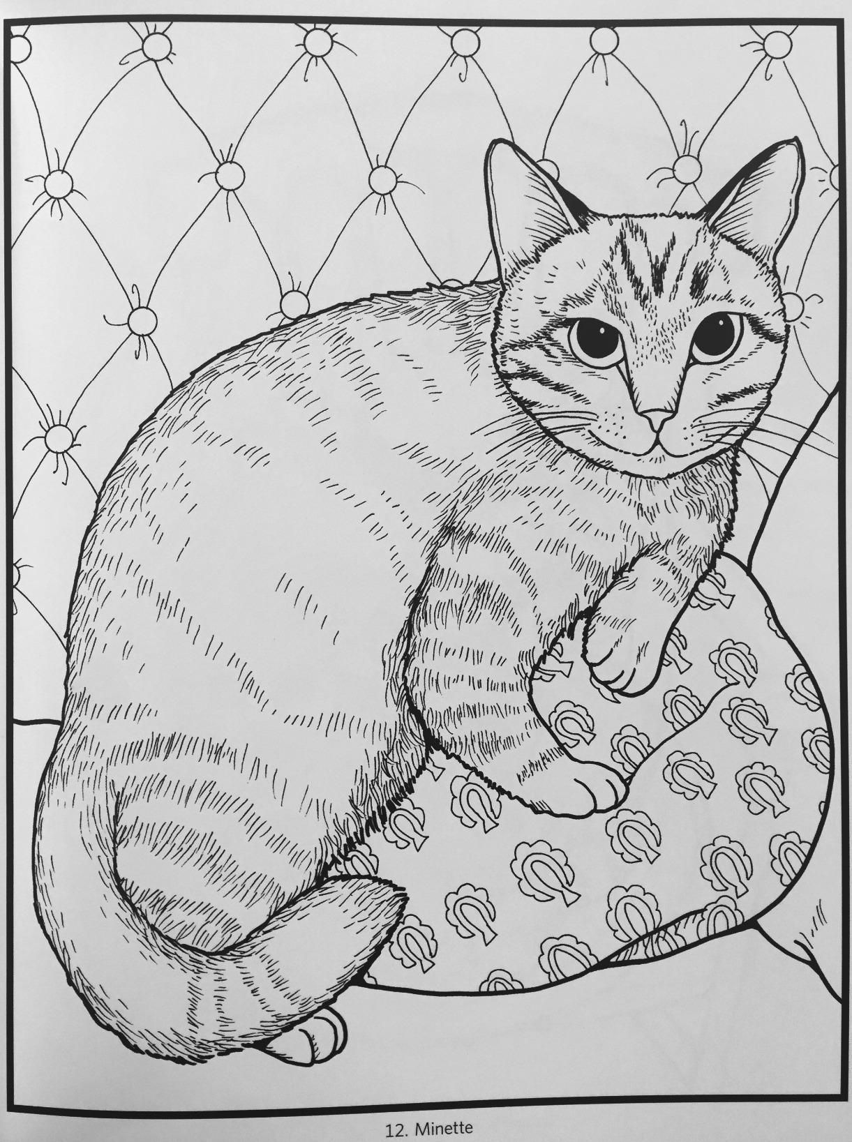 Amazon Iiiireaders Review Of Mimi Vang Olsen Cats Coloring Book