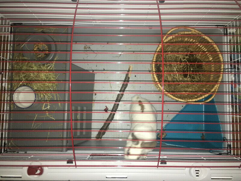 Listing item Cages for sale, Rabbits for sale, Small pets
