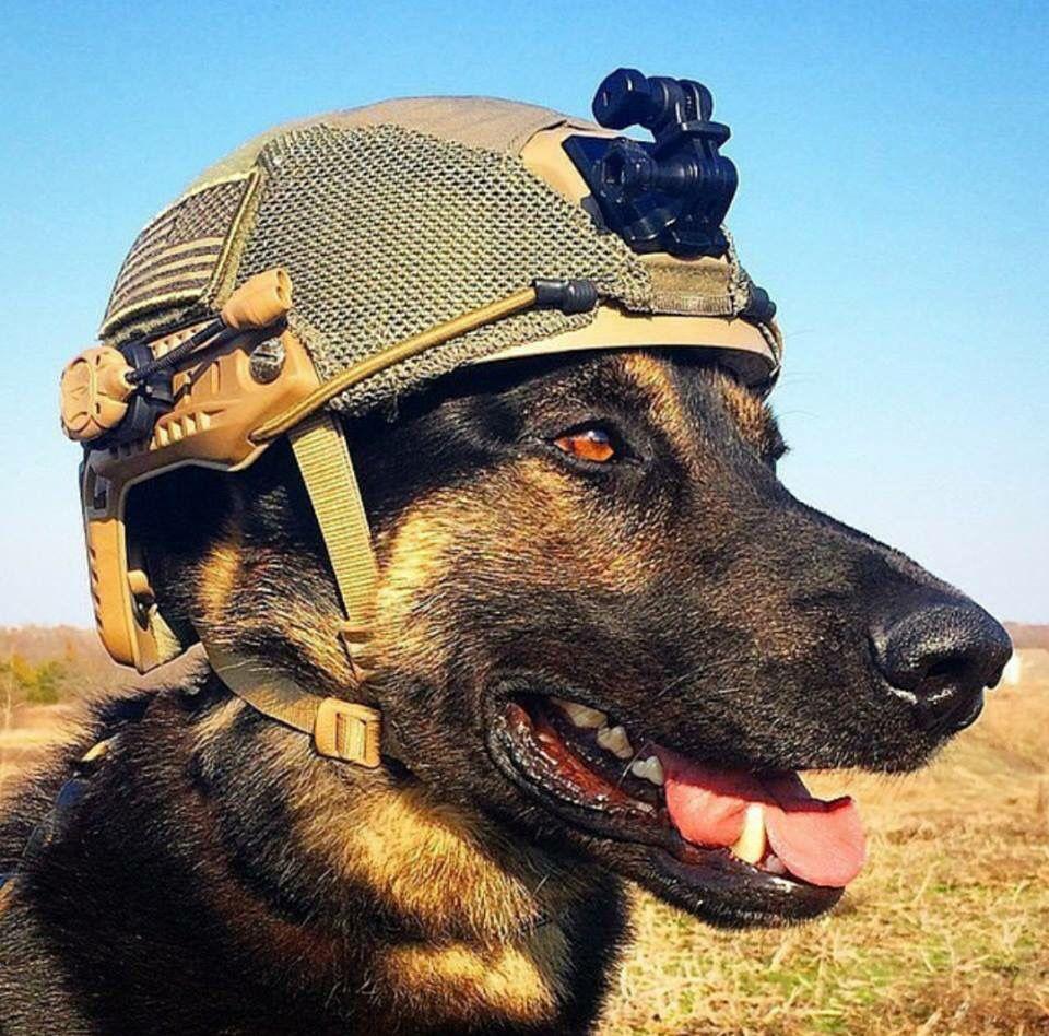 Solidier War Dog