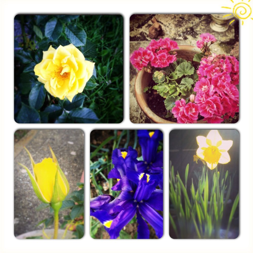 Collage Of Pretty Flowers Yellow Rose Pink Geraniums Yellow Rose