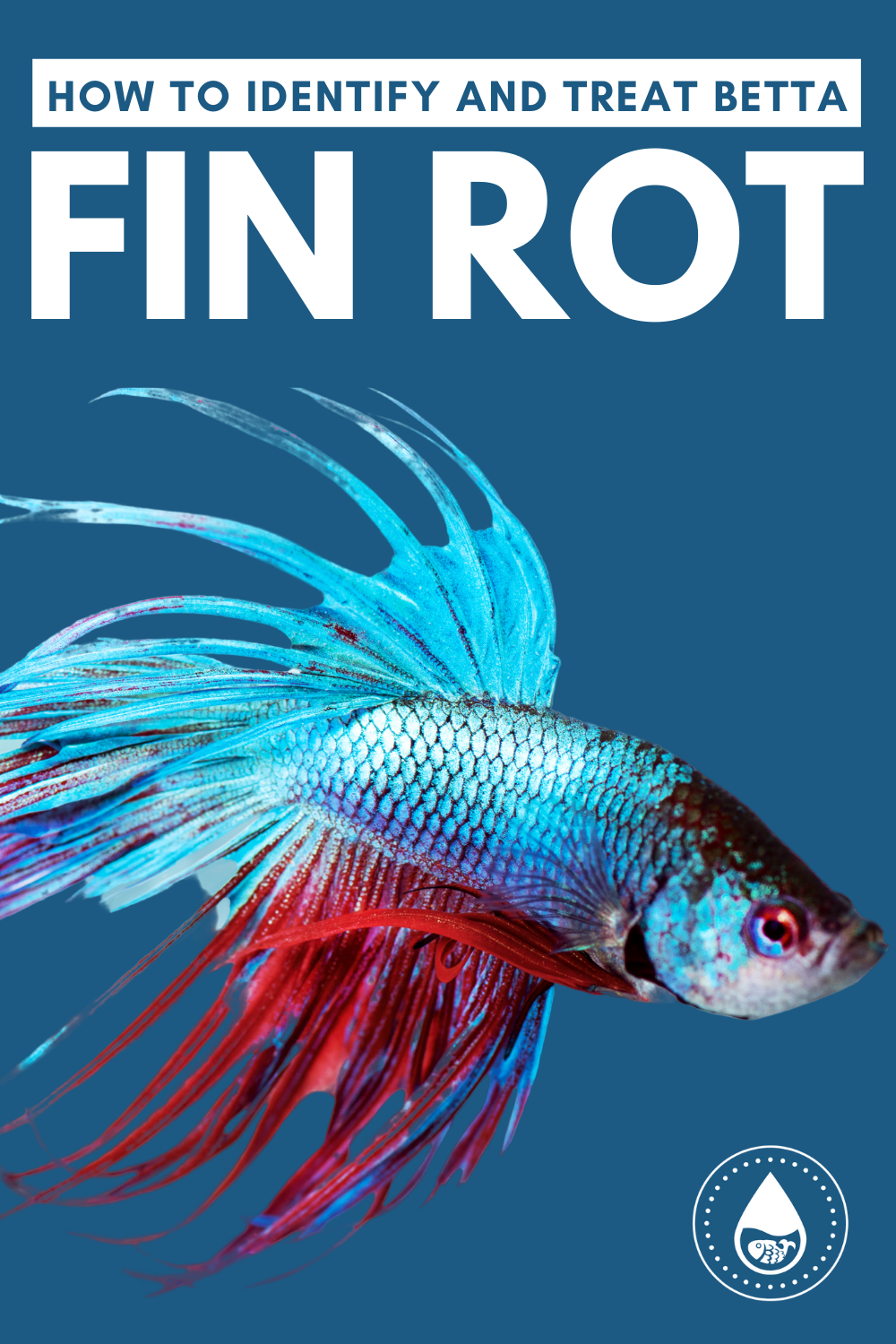 How To Identify And Treat Betta Fin Rot In 2020 Betta Rot Aquarium Set