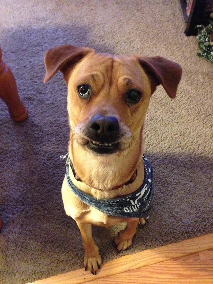 Natty Dog Veterinary Hospital Pet Clinic Animal Hospital