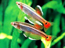 Hardy Aquarium Fish Aquarium Fish Saltwater Aquarium Fish Fish Tank Terrarium