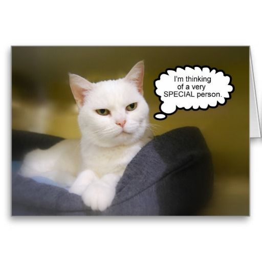 White Cat Brother Birthday Humor Card Crazy For Cats