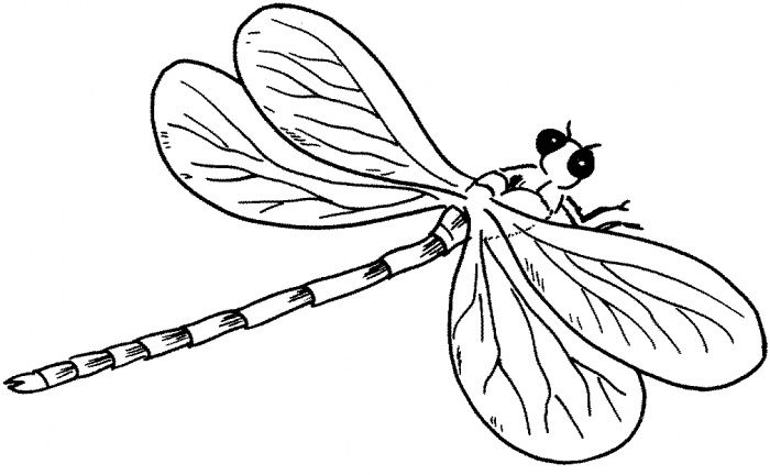 Dragonfly Outline Dragonfly Drawing Coloring Pages Flower Line Drawings