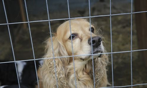 Image result for puppy mills Puppy mills, Buy puppies