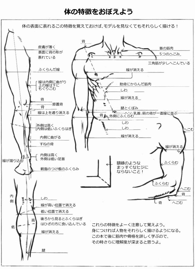 人体の簡易骨格 2 無料で読める ルーミス本 人体 筋肉解剖学 美術解剖学