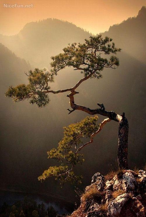 Beautiful Natural Bonsai | Most Love Moments