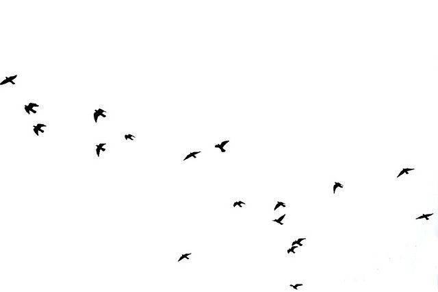 Birds Flying High You Know How I Feel Birds Flying Black And White Birds White Aesthetic Photography