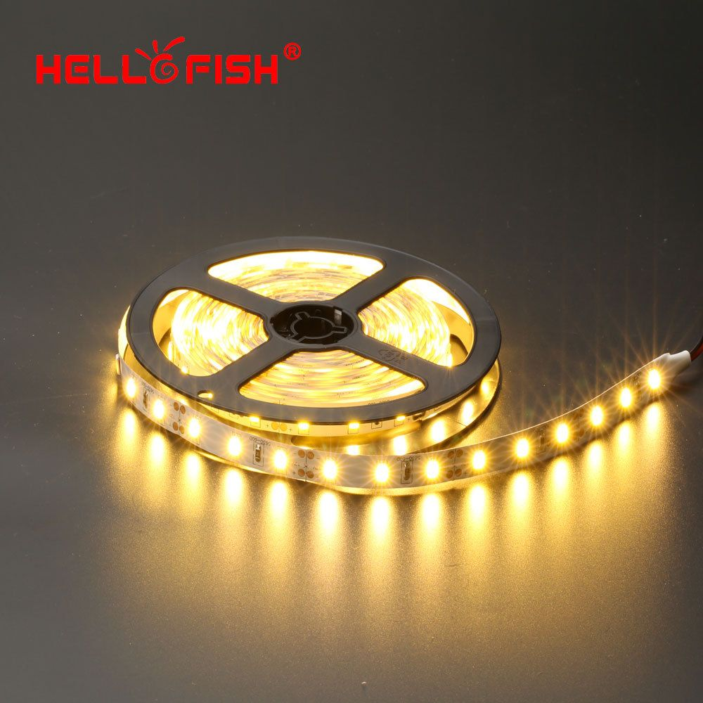 Hello Fish 5m 300led 5050 Led Strip 12v Led Tape White Warm White Blue Green Red Yellow Rgb Free Shipping In Led Strips From Lights Led Lights Led 12v Led