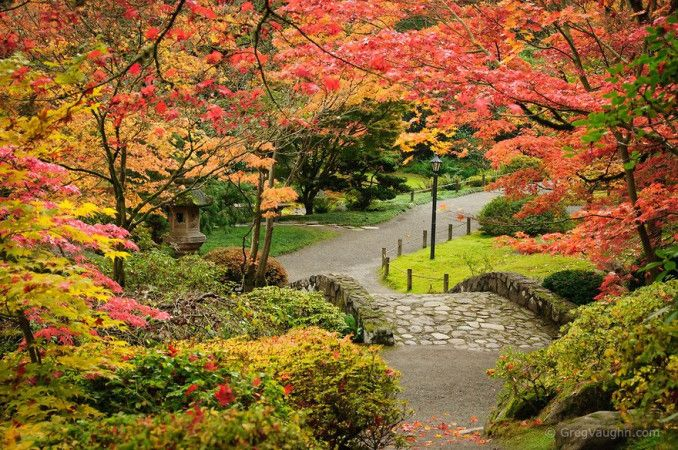 Autumn colours on display at the Japanese Garden in